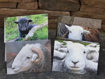 Greetings cards: Herdwick