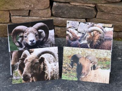 Greetings cards: Primitives